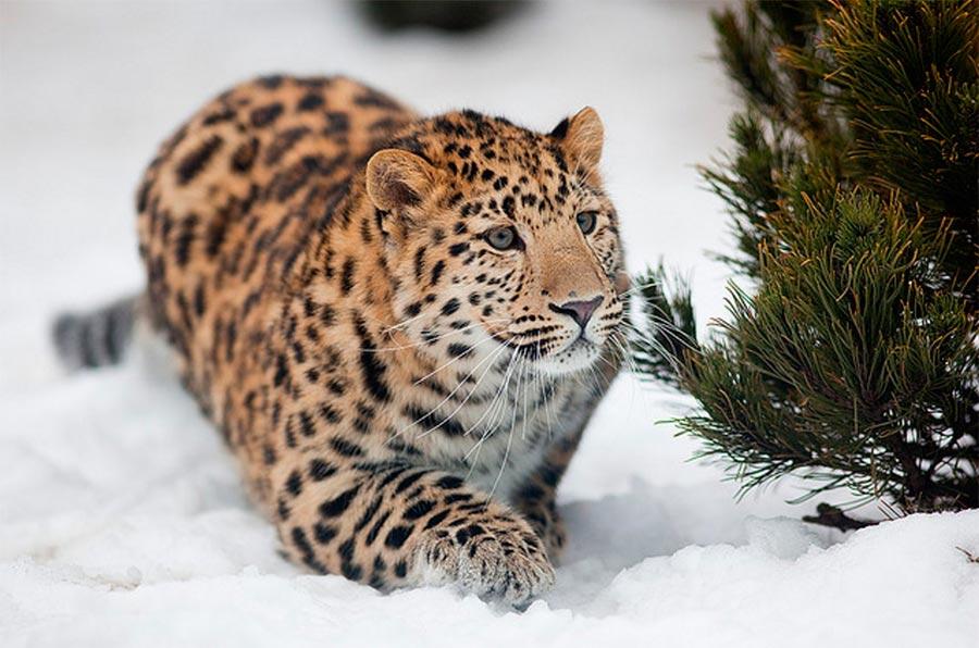 rareanimals verge extinction 9 - ТОП-10 Редких животных на грани вымирания