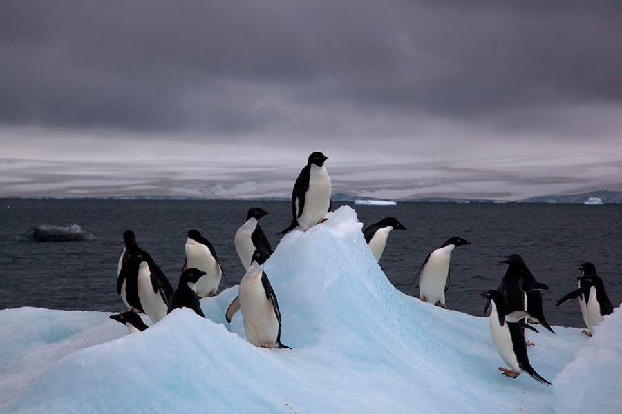 Самые дикие места на Земле wild places on Earth Антарктида Antarctica