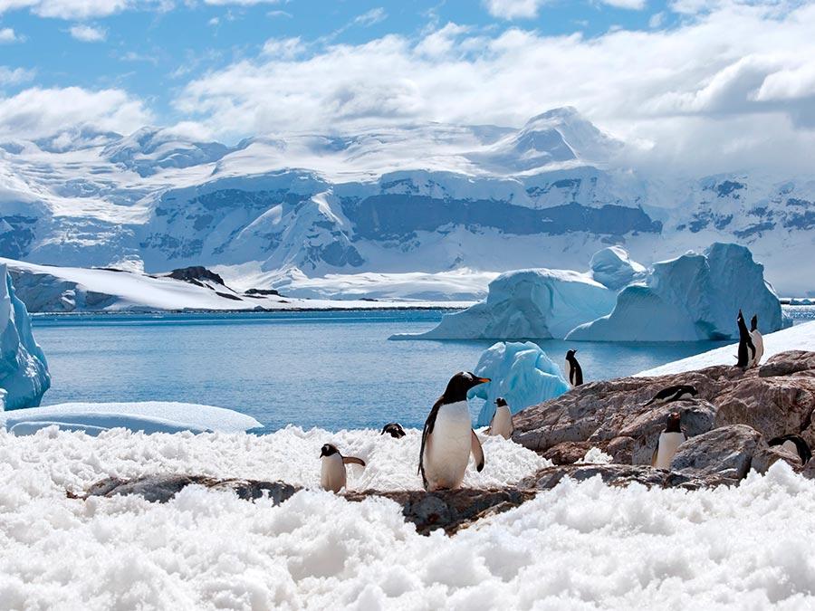 adventure приключения Антарктида Antarctica