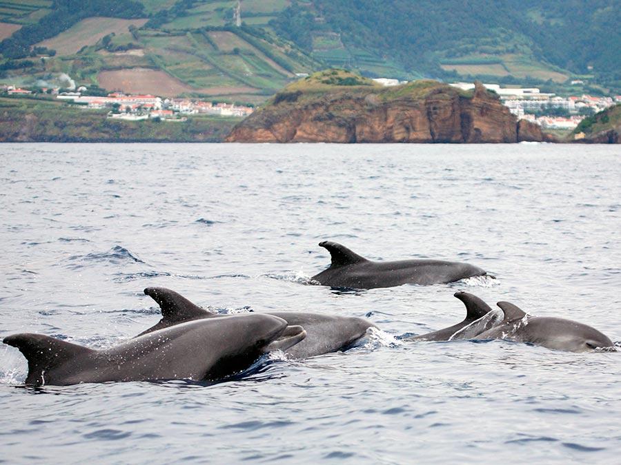 adventure приключения Азорские острова Azores
