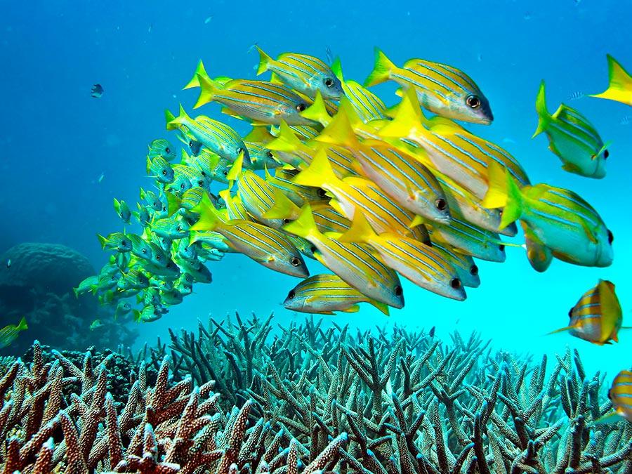 adventure приключения Большой Барьерный Риф Австралия The Great Barrier Reef Australia