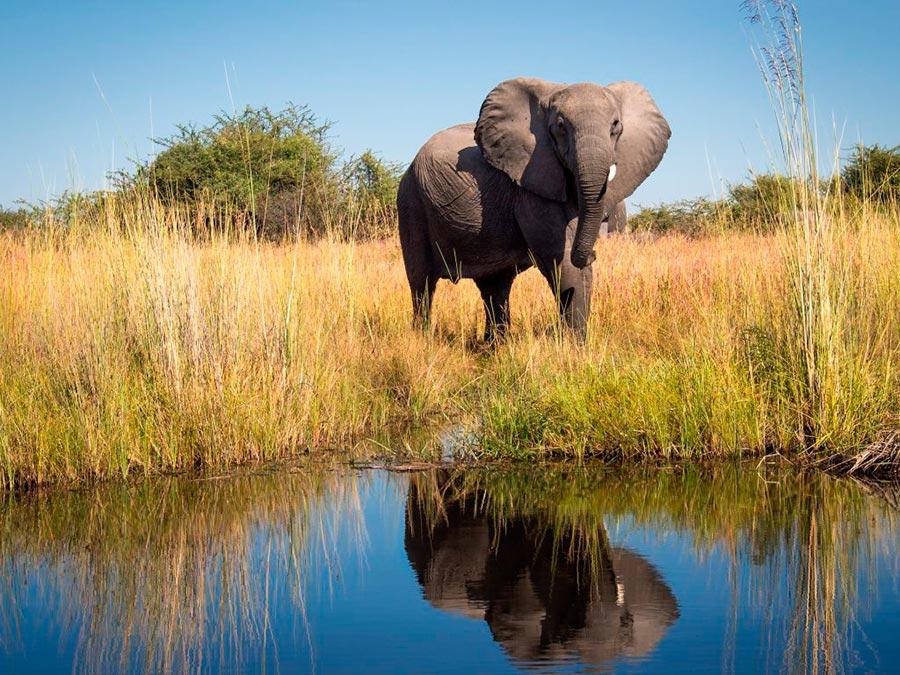adventure приключения Окаванго Ботсвана Okavango Botswana