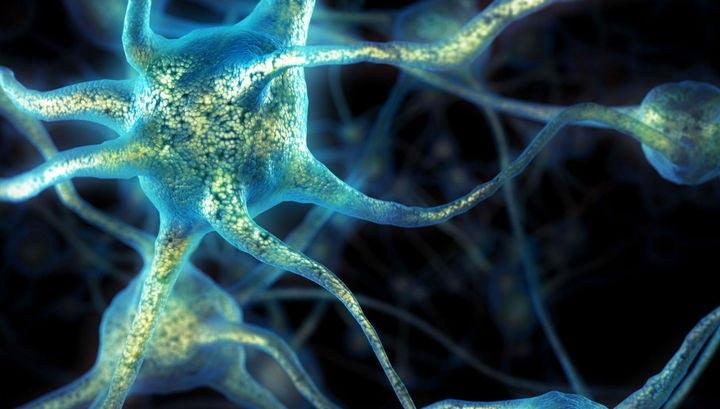 центральная нервная система возникала в процессе эволюции несколько раз