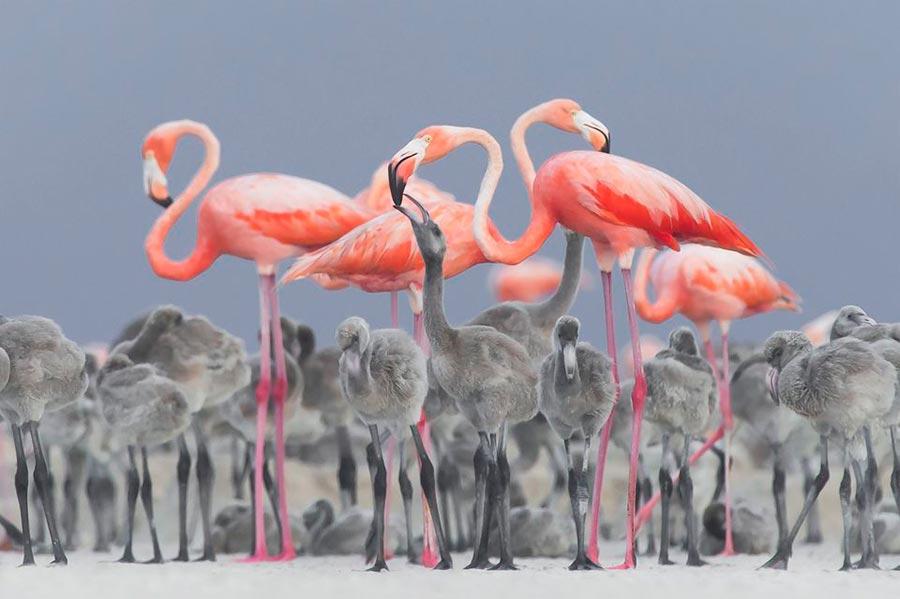 конкурс фотографии природы National Geographic 2017 Alejandro Prieto