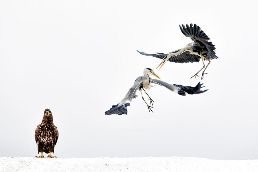 конкурс фотографии природы National Geographic 2017 Bence Máté