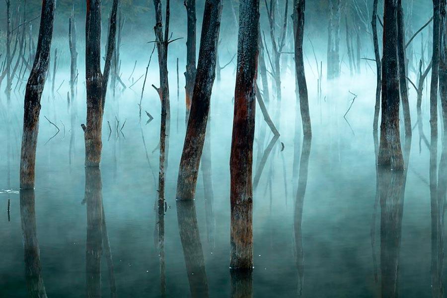 конкурс фотографии природы National Geographic 2017 Gheorghe Popa