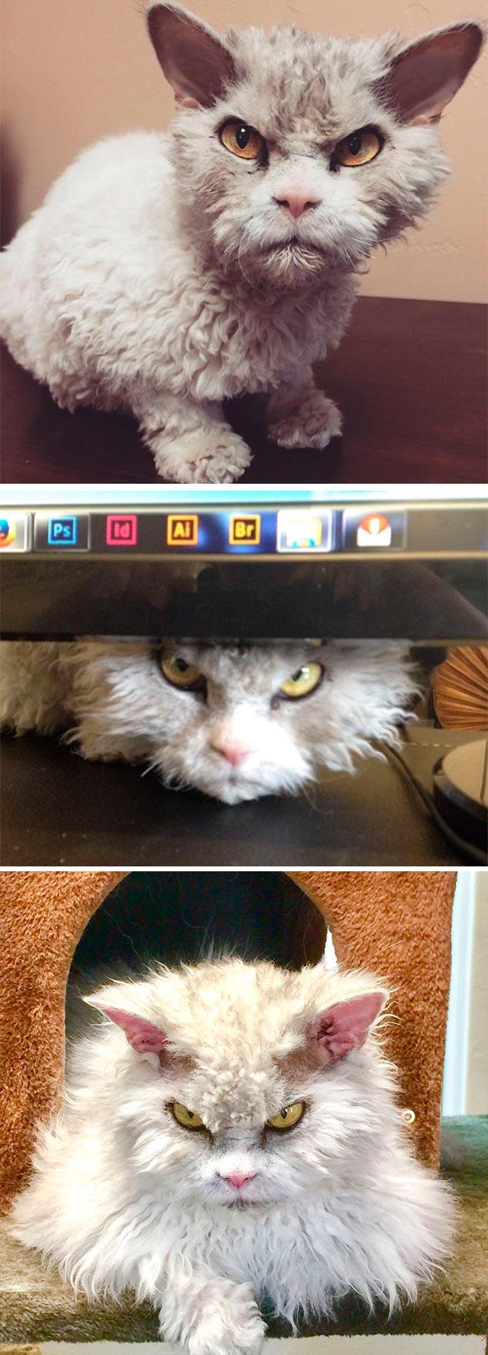 злой кот angry cat
