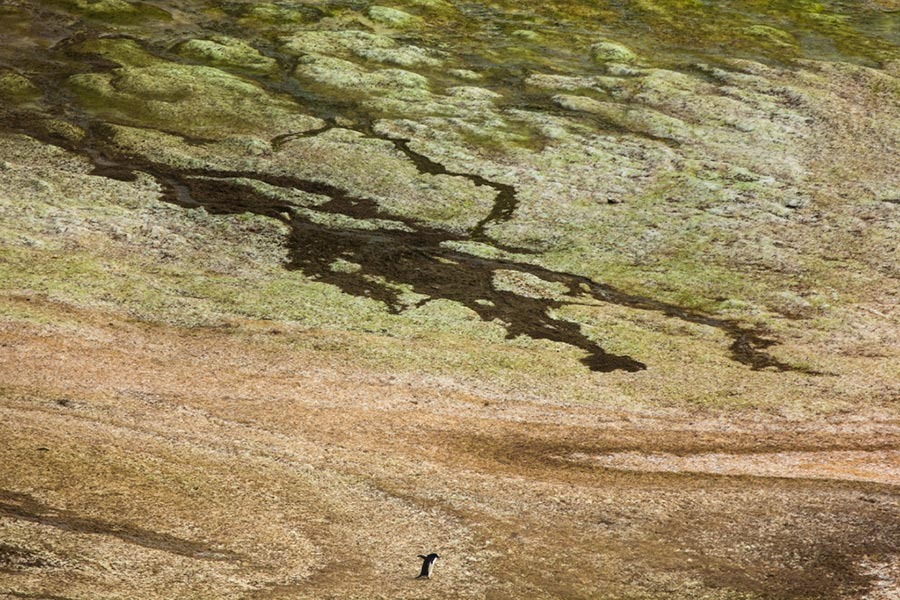 Гастон Лакомб Gaston Lacombe фотографии изменят представление об Антарктиде photo change the idea about Antartica
