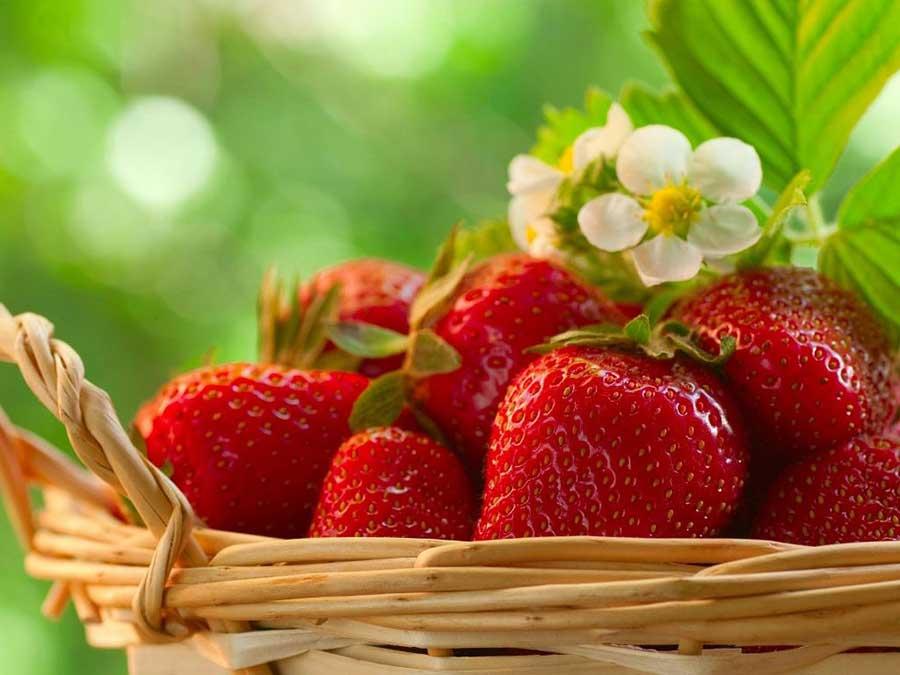 свойства клубники properties of strawberries