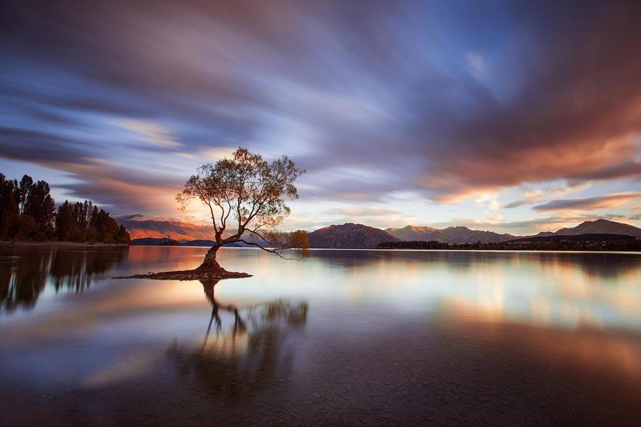 Правило третей фотография с отличной композицией Одно дерево в тиши Роб Дикинсон