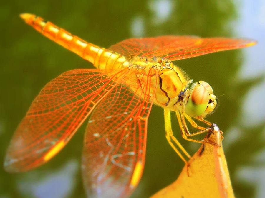 научные истории 2017 года scientific stories of 2017 крылья стрекозы живые the wings of dragonfly live