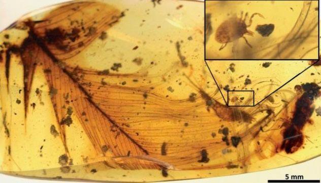 научные истории 2017 года scientific stories of 2017 древний клещ ancient tick