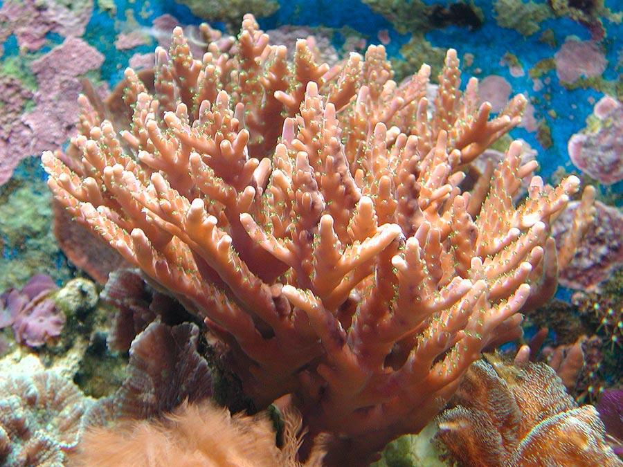 научные истории 2017 года scientific stories of 2017 губка гребневик sponge ctenophore