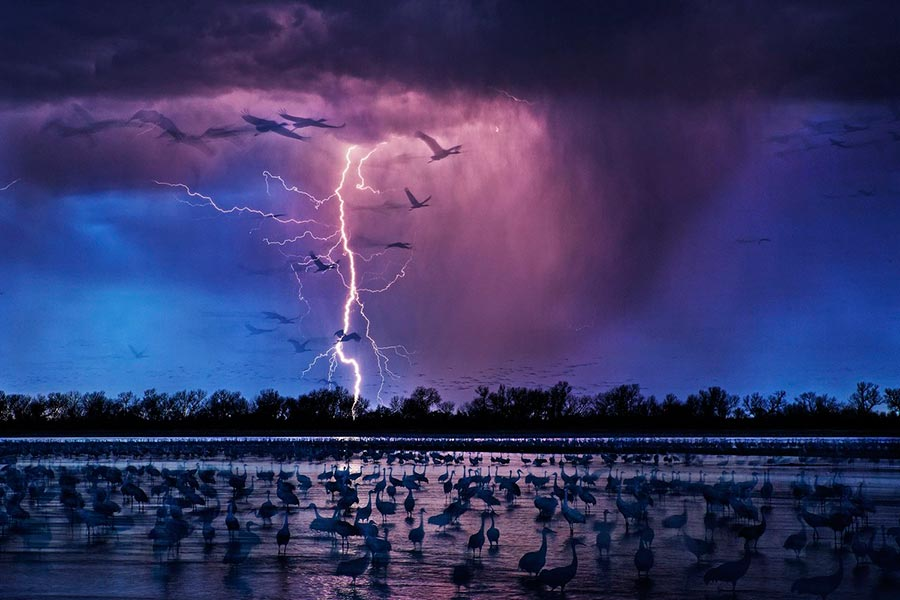 Фотоконкурс Siena International Photo Awards 2017 журавли cranes Рэнди Олсон Randy Olson