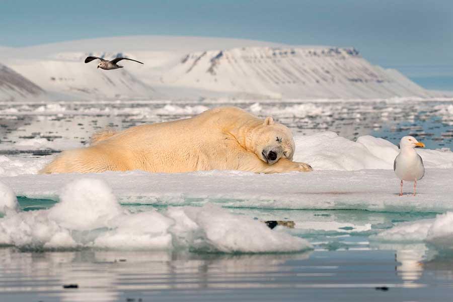 Фотоконкурс Siena International Photo Awards 2017 В мечтах о морском льде Рой Галиц Свальбард Dreams of sea ice Roy Galicia Svaibard
