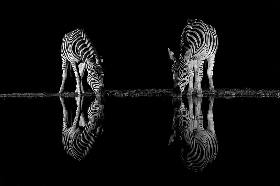 Фотоконкурс Siena International Photo Awards 2017 зебры в ночи Даниэль Бурон zebra in the night Daniel Buron