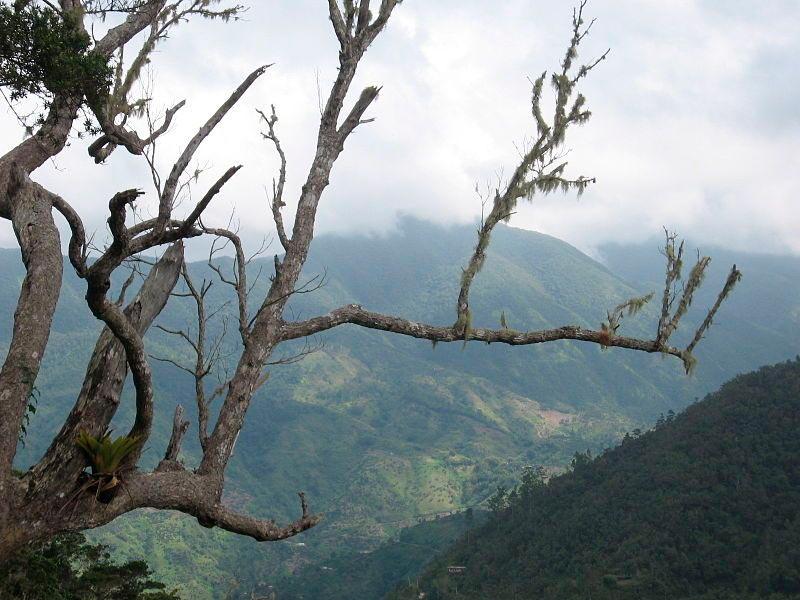 достопримечательности ЮНЕСКО sights UNESCO голубые горы Ямайка blue mountains Jamaica
