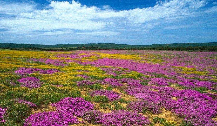 достопримечательности ЮНЕСКО sights UNESCO цветочный регион Капская область ЮАР flower region Western Cape of South Africa