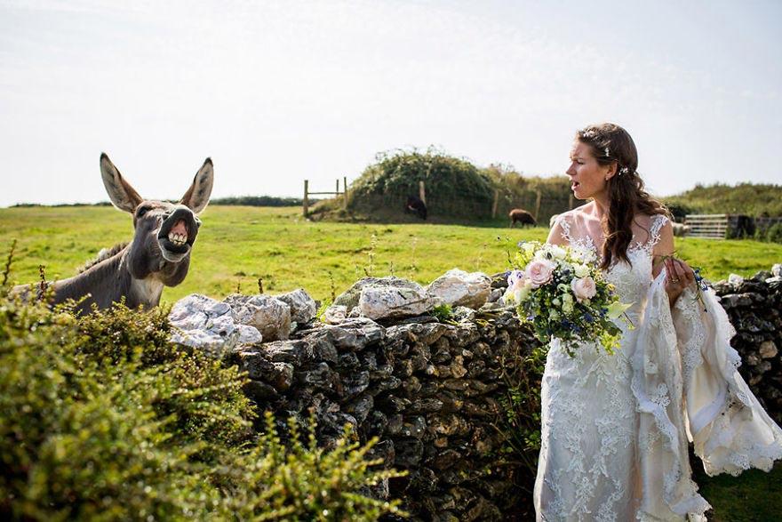 Животные, которые были звездой свадьбы