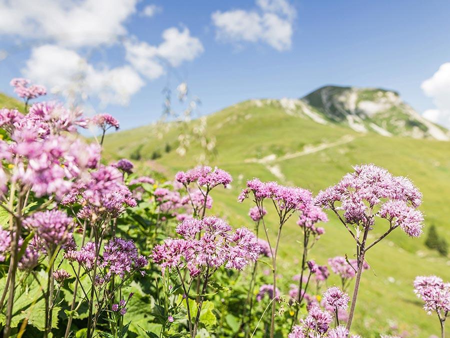 Австрия: природные и городские достопримечательности Национальный парк Хоэ Тауэрн