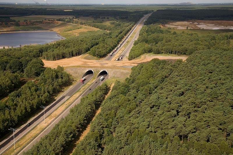 Экодуки: мосты Бельгия
