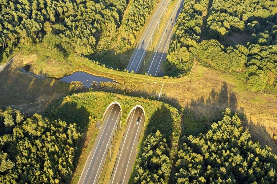 Экодуки: мосты Нидерланды