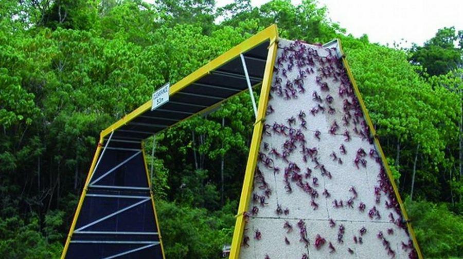 Экодуки: мосты Австралия