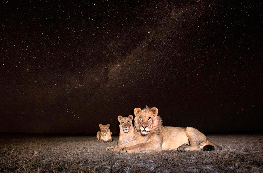 Уилл Барред-Лукас: природа ночной Замбии Will Burred-Lucs nature night Zambia