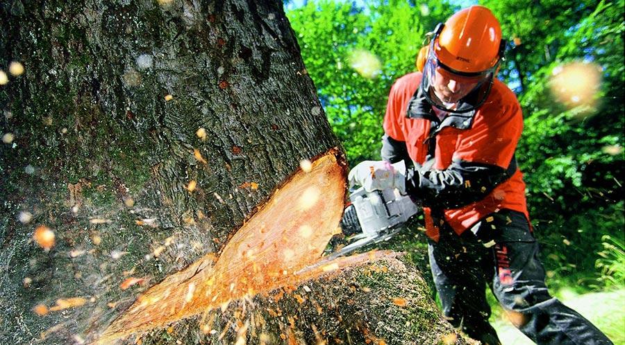 опасные профессий в мире Лесоруб