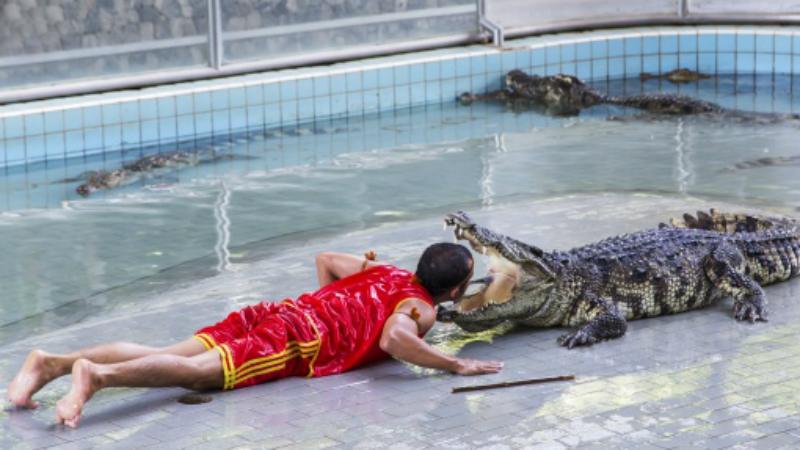опасные профессий в мире Укротитель крокодилов