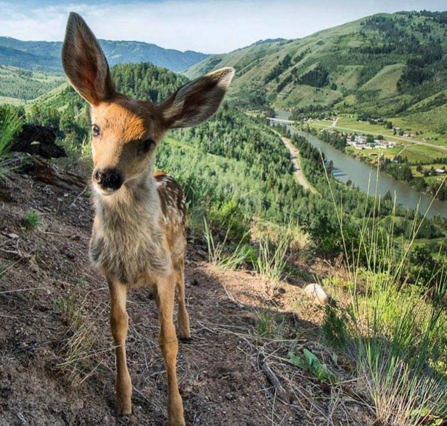 National Geographic: самые популярные фото 2017 года в Instagram