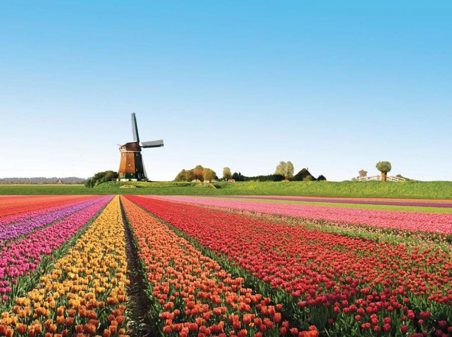 природа восхитительно красочна Голландия