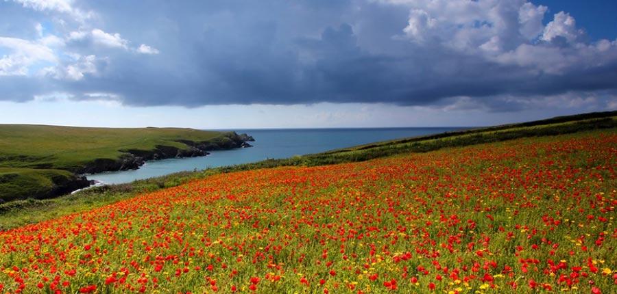 природа восхитительно красочна Англия