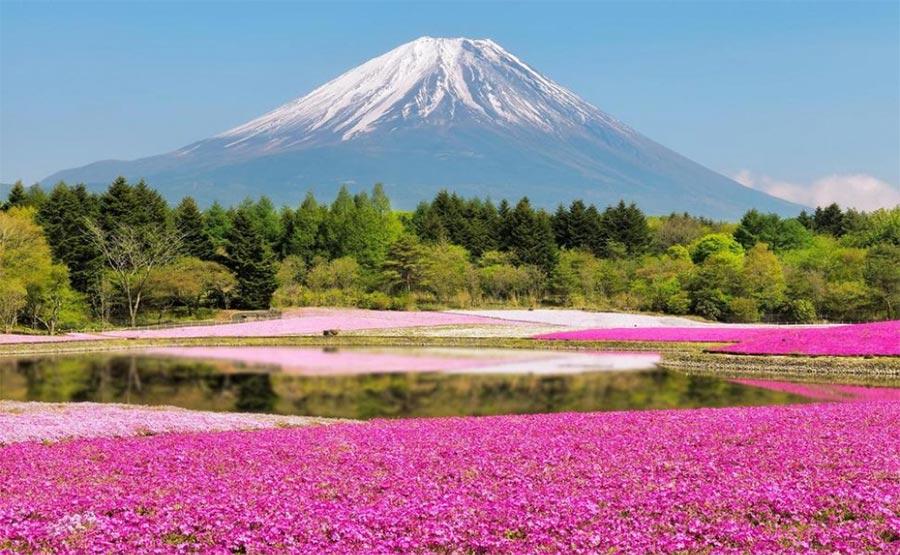 природа восхитительно красочна Япония