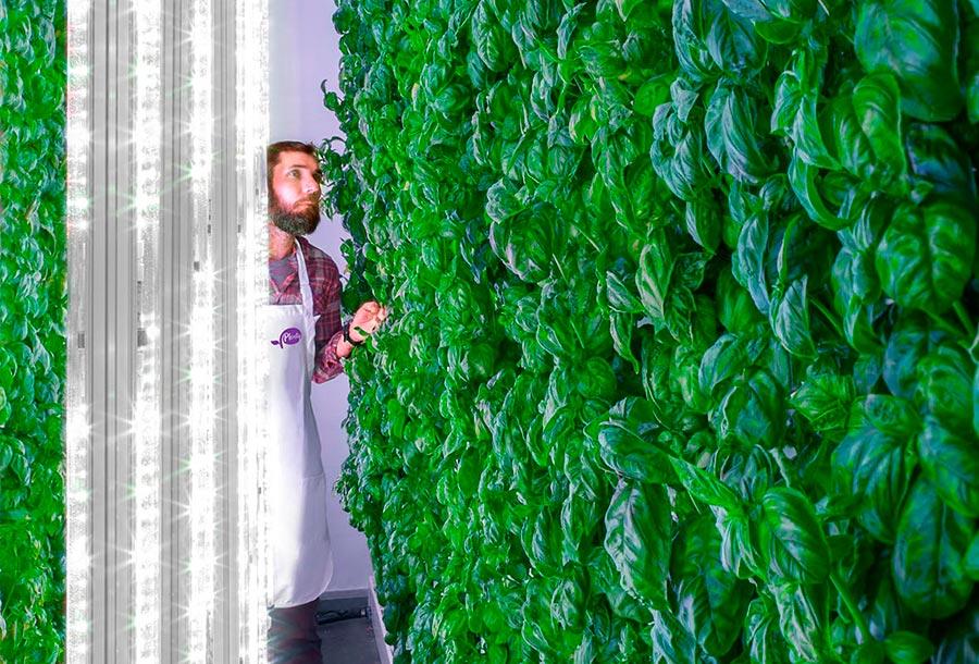 technologies технологии 2018 Вертикальные фермы vertical farms