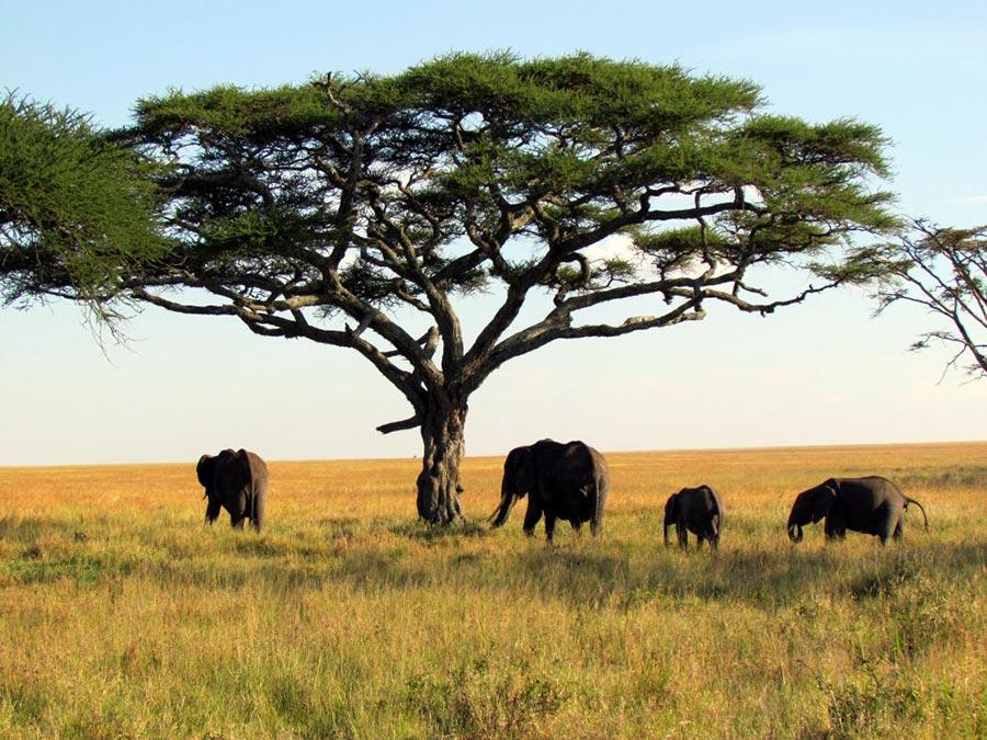 теплые места Танзания Африка