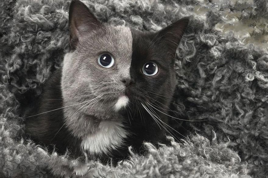 Котенок с двумя лицами