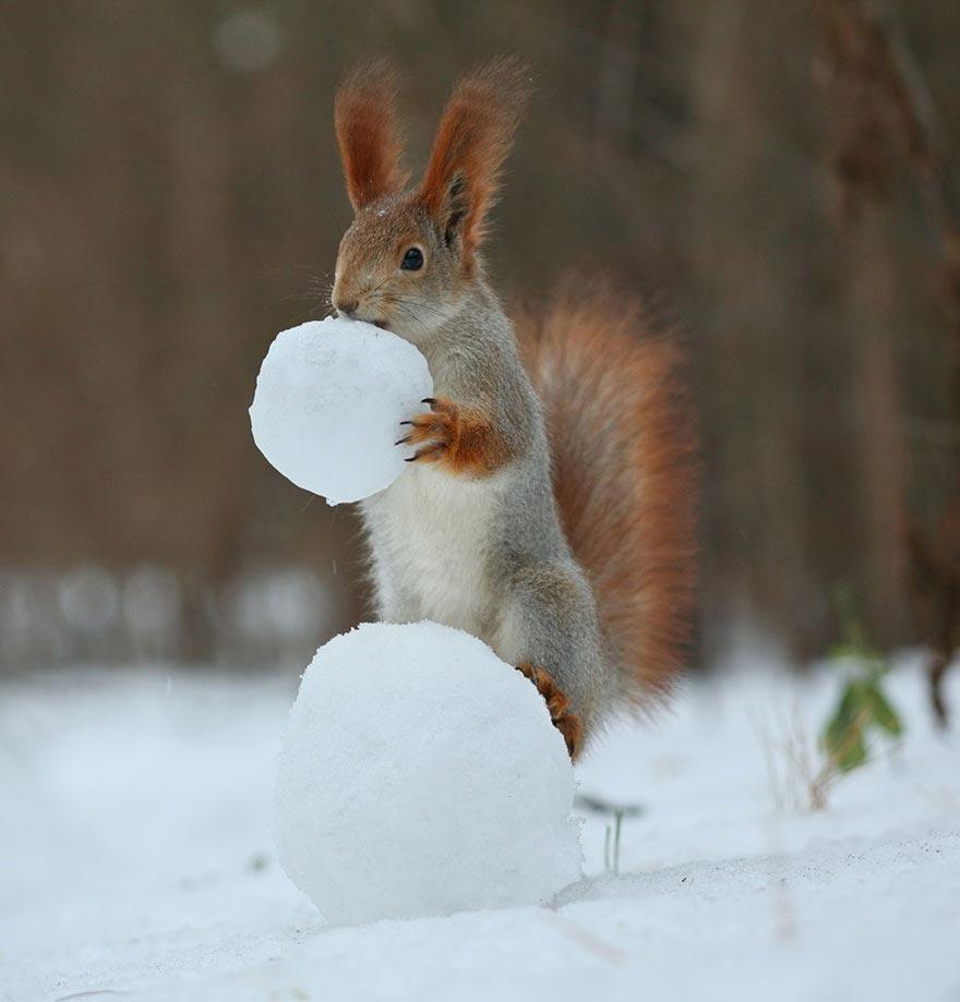 Вадим Трунов фотосессия играющих белок