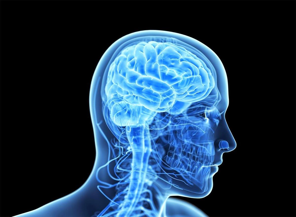 Долговременная депрессия меняет физиологию мозга