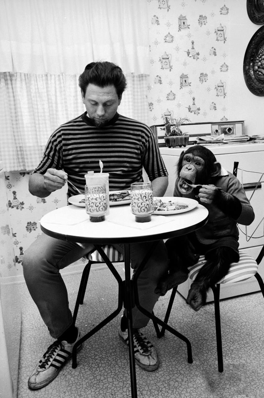 Экзотические питомцы шимпанзе