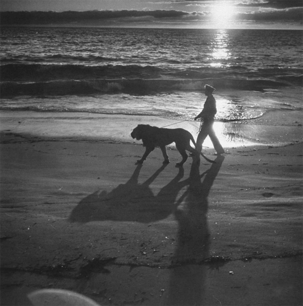 Экзотические питомцы Мужчина со львом на пляже