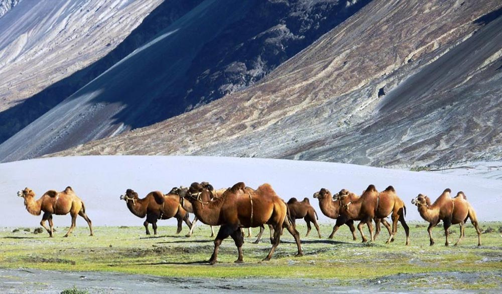 Ladakh Ладакх долина Нубра Nubra valley