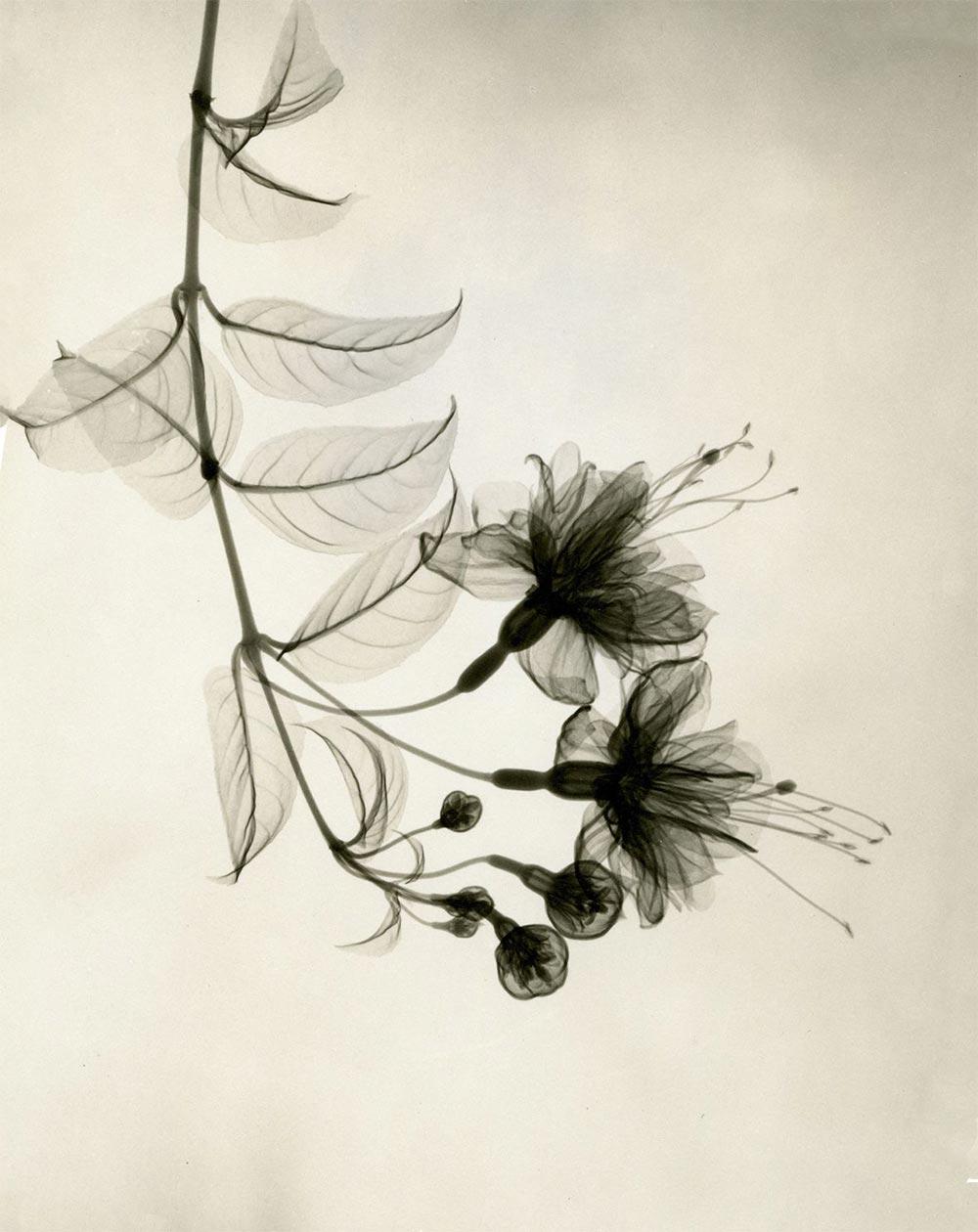 Дэйн Таскер Dain L. Tasker Великолепие цветов под рентгеновскими лучами
