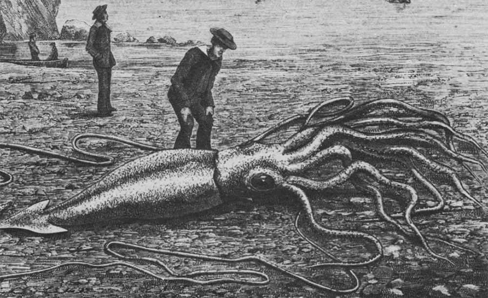 большое животное Гигантский кальмар