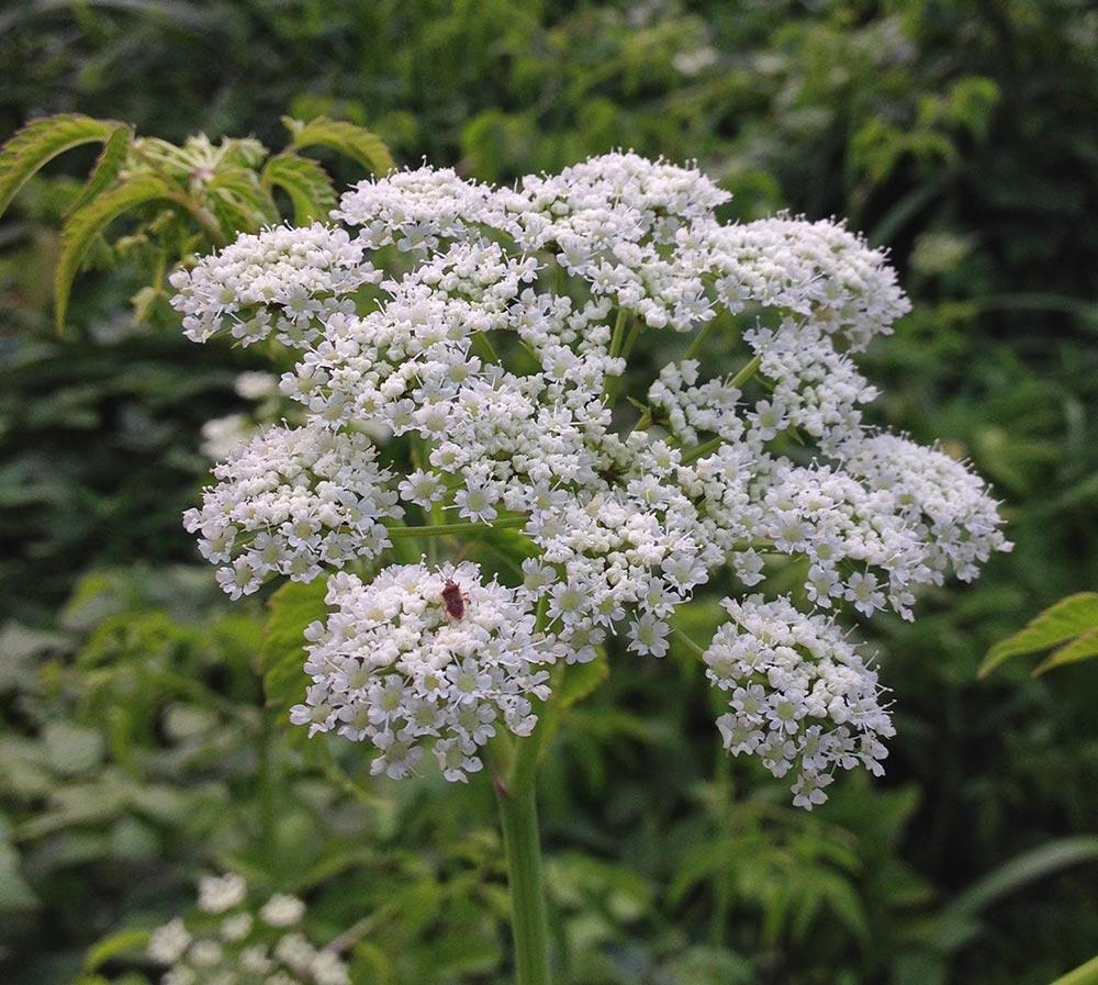 dangerous plants 1 - 25 самых опасных растений, которые могут по-настоящему причинить вам боль