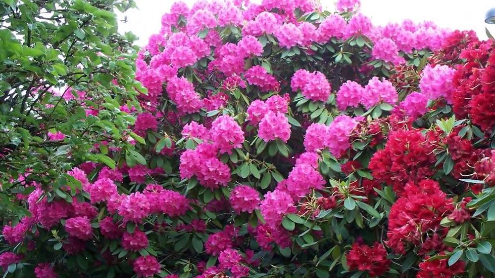 dangerous plants 5 - 25 самых опасных растений, которые могут по-настоящему причинить вам боль