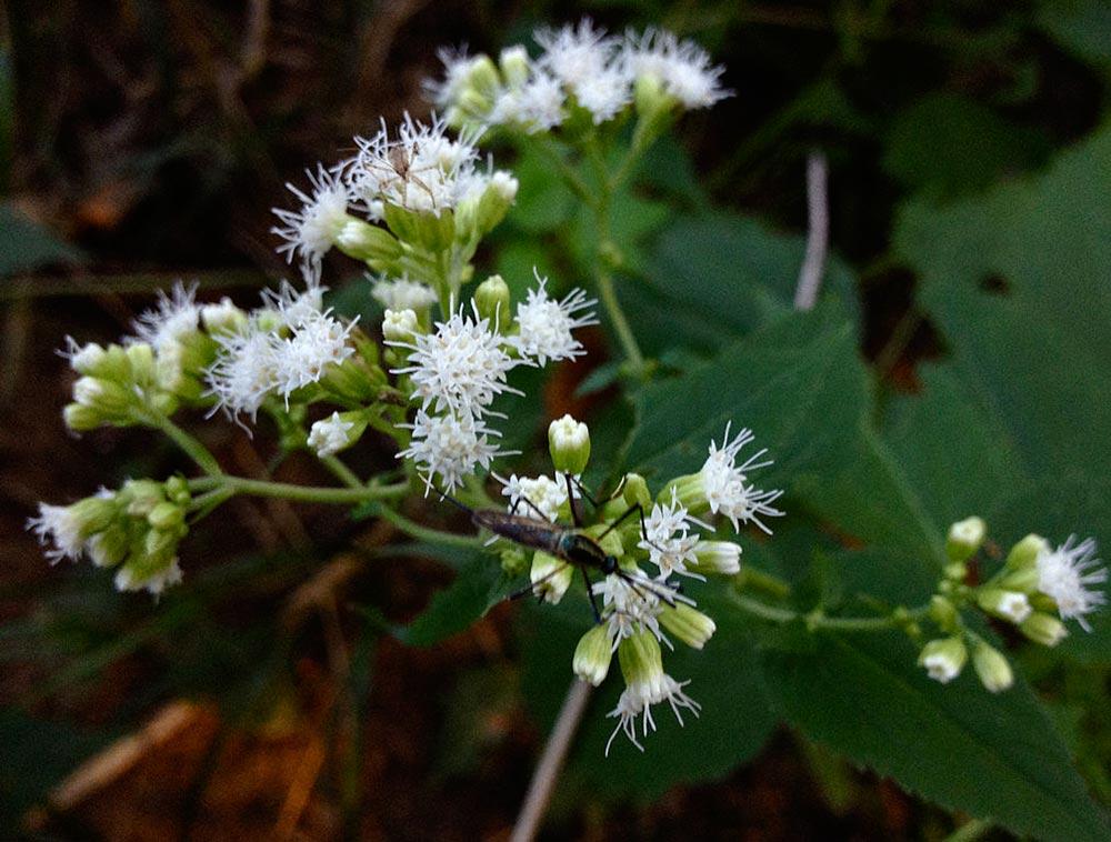 dangerous plants 6 - 25 самых опасных растений, которые могут по-настоящему причинить вам боль