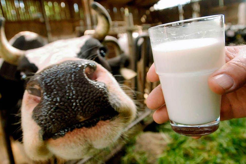 опасные продукты Молоко и молочные продукты