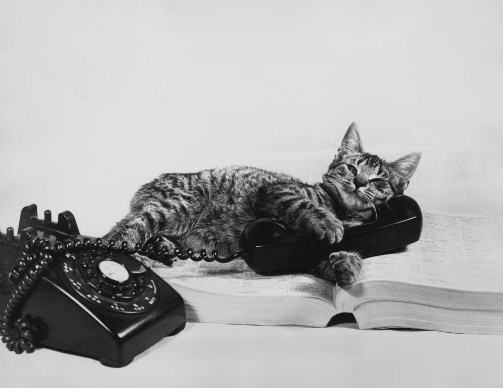 исторический факт Кот-телефон