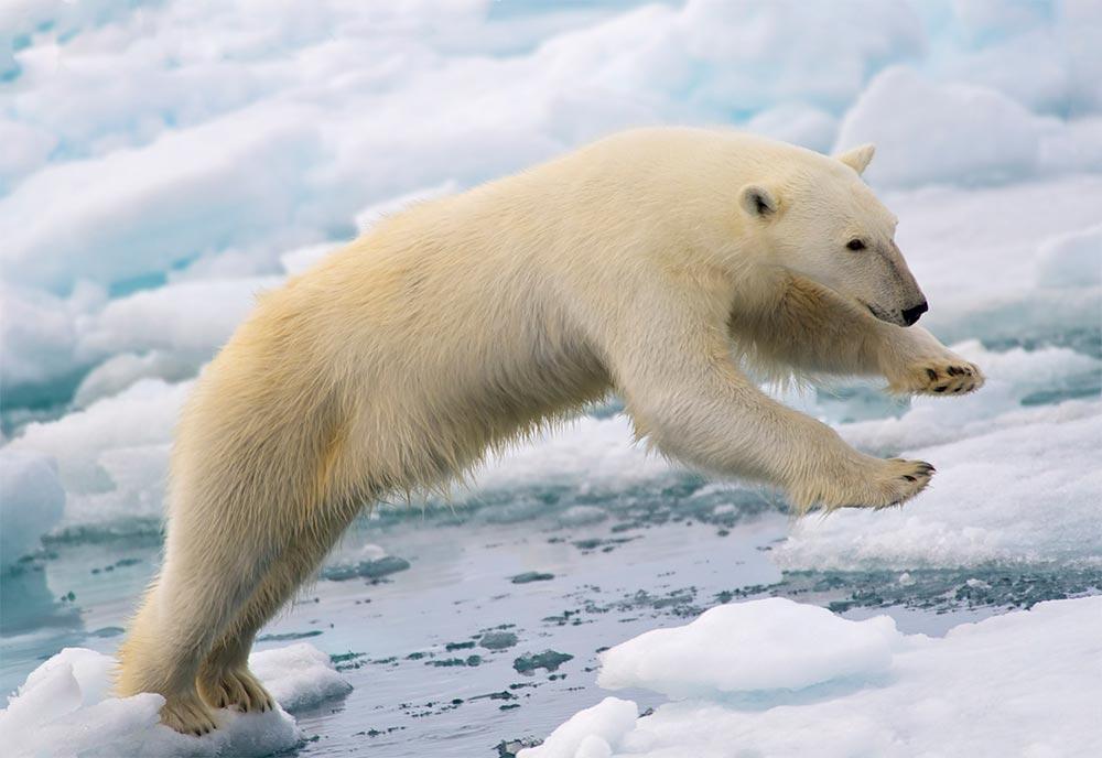 Конец света который так и не наступил белый медведь